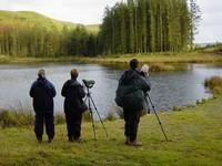 Tecniche di birdwatching..