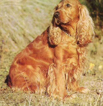 Creole Dog Breed