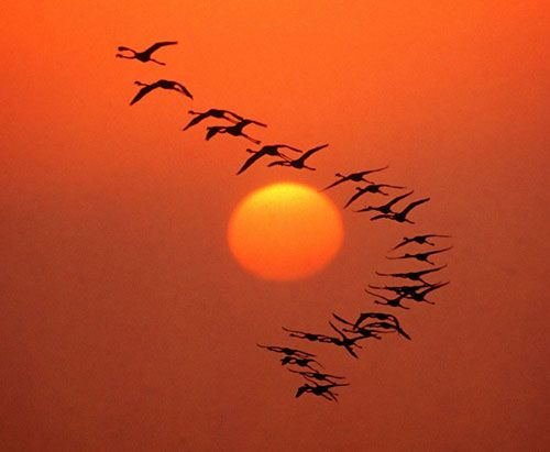 Uccelli Migratori..