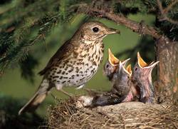 CLicca qui per vedere le Schede degli Uccelli..