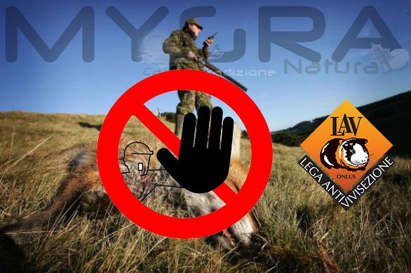 Stop caccia alla volpe