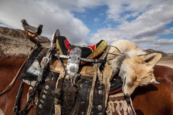 cacciatori-con-le-Aquile-della-Mongolia-02
