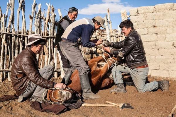 cacciatori-con-le-Aquile-della-Mongolia-03