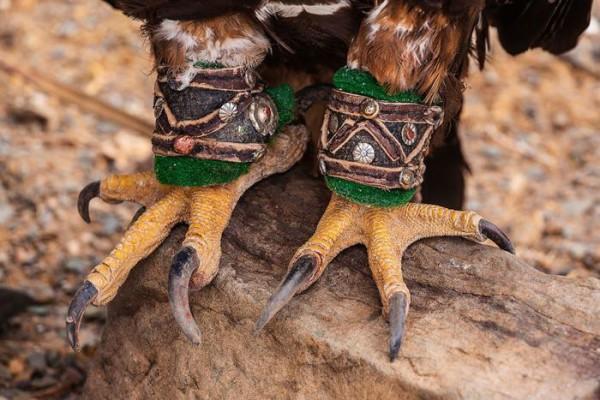 cacciatori-con-le-Aquile-della-Mongolia-06