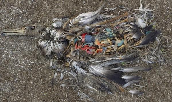 Uccello di plastica