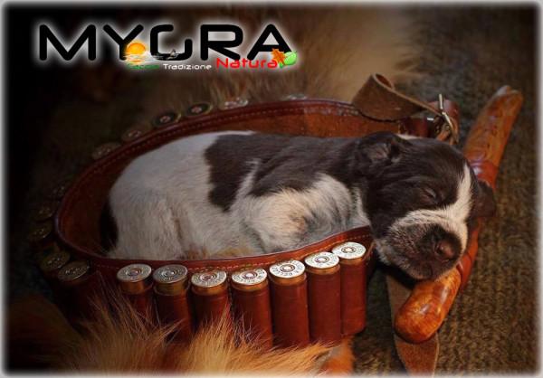 Cane caccia che dorme