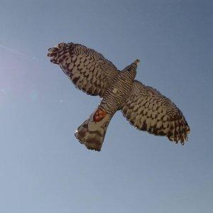 Falco gonfiabile
