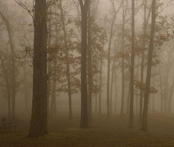 Foresta 1