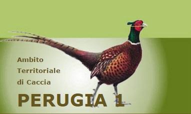 ATC Perugia 1