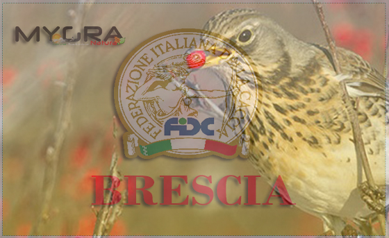 Federcaccia-Brescia cesena