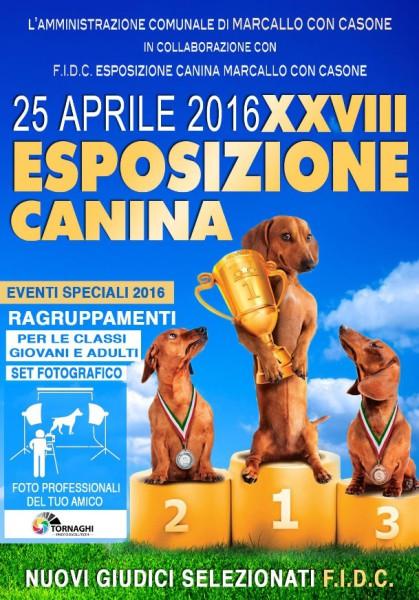 Esposizione canina Marcallo