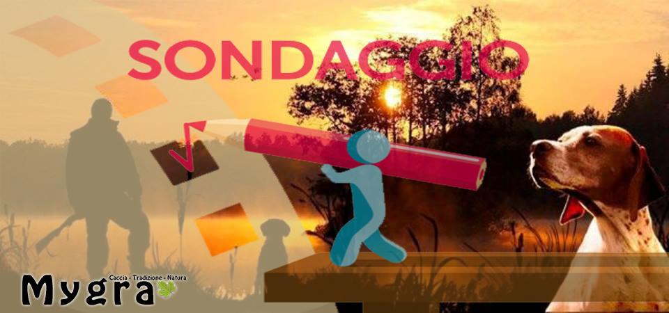 SONDAGGIO. Sardegna, le associazioni ambientaliste chiedono la sospensione della stagione venatoria. Siete d'accordo?