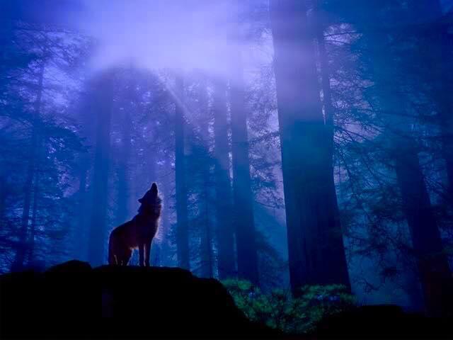 Fidc Brescia. Caso lupi, esempio preoccupante