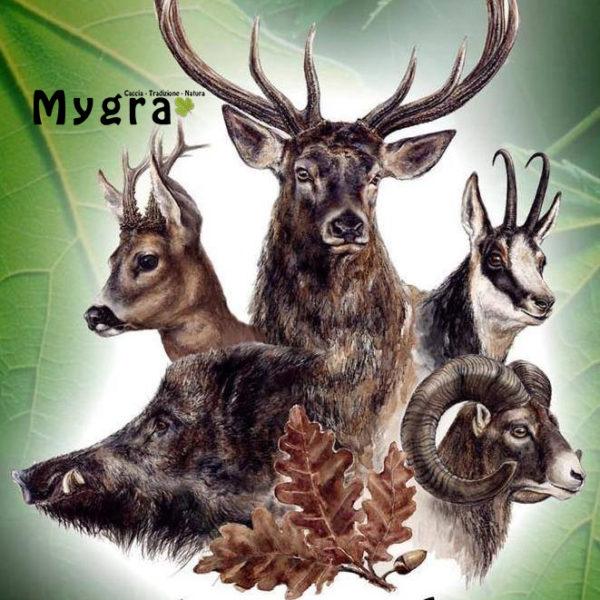 Ungulati Mygra