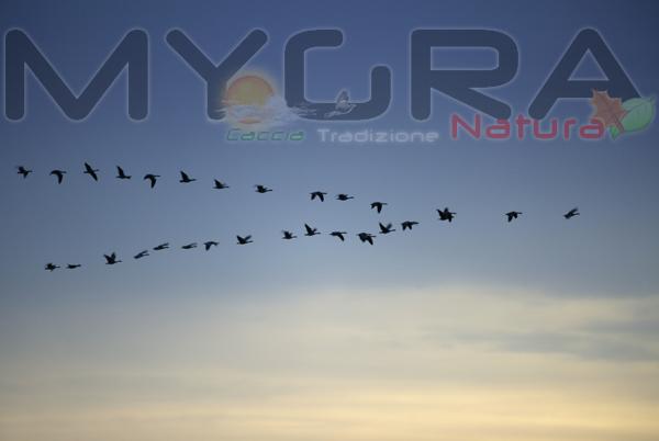 Per gli spostamenti e le migrazioni degli uccelli l'olfatto è essenziale