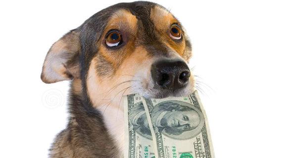 cane-soldi