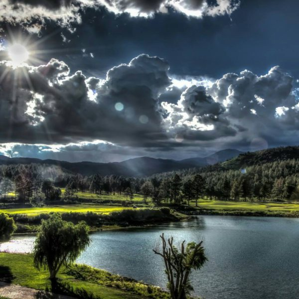 Bosco e lago