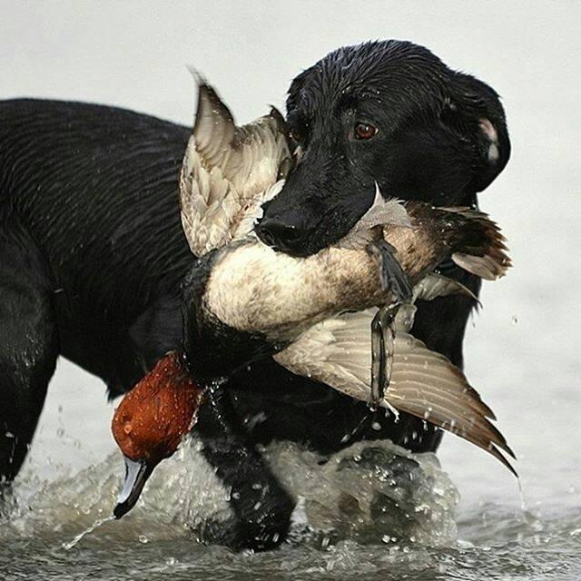Il cane come ogni essere vivente ha il suo impatto sul nostro mondo e sull'ambiente