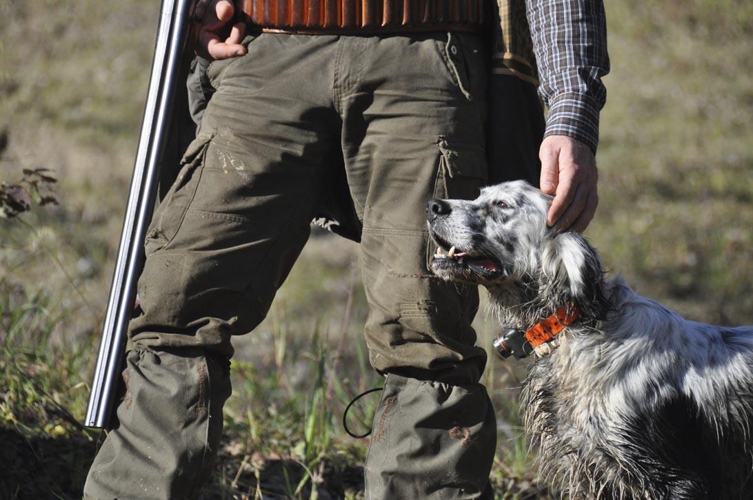 AIDAA: 3.000 cani uccisi dai cacciatori per ottenere i risarcimenti dalle assicurazioni