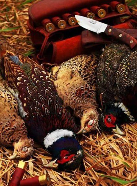 Carniere di fagiani