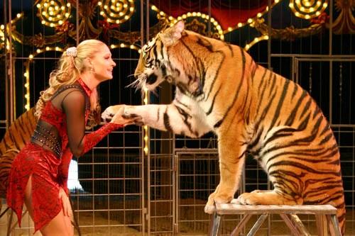 Tigre nel circo