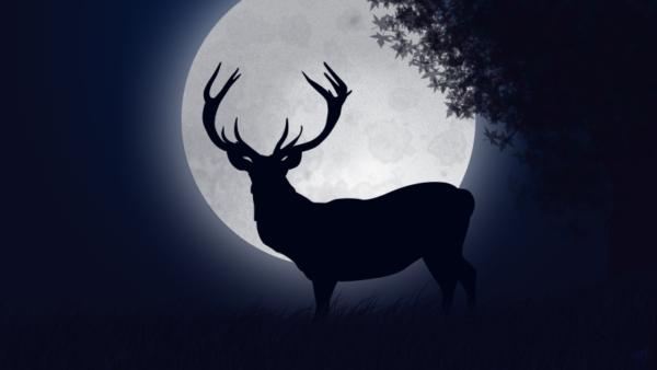 cervo-di-notte