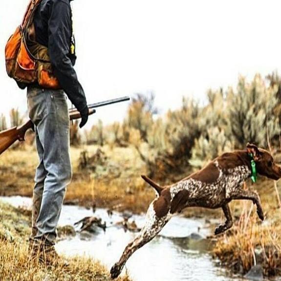 cacciatore-cane-1410016