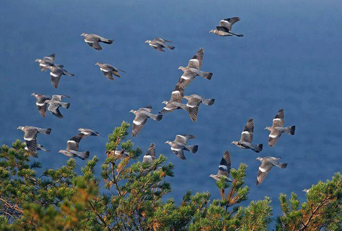 Le condizioni meteo non hanno agevolato la migrazione della prima settimana di ottobre
