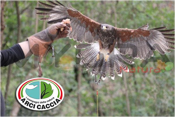 falconiere-arcicaccia-600x400