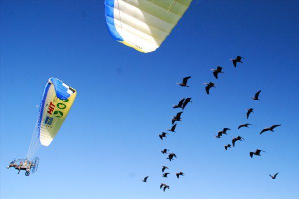 ibis-migrazione
