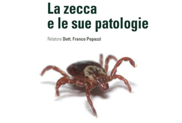 la-zecca-e-le-sue-patologie-miniatura