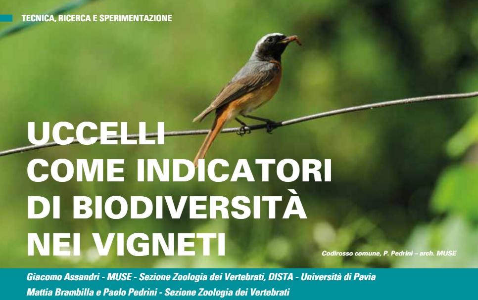 Uccelli come indicatori di biodiversità nei vigneti