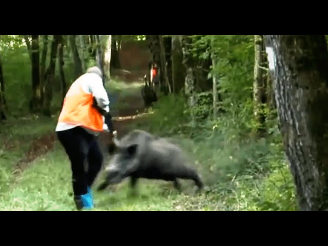 Worst-Wild-Boar-Attacks-of-all-times-Wild-boar-Hunting-Chasse-sanglier-Caccia-Cinghiale-Jabali