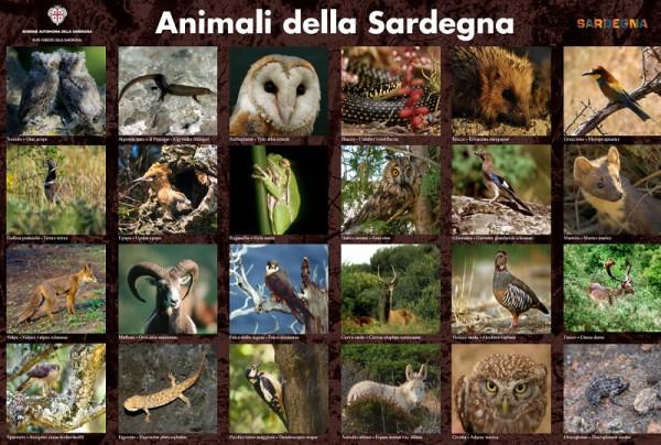 Fauna Sardegna