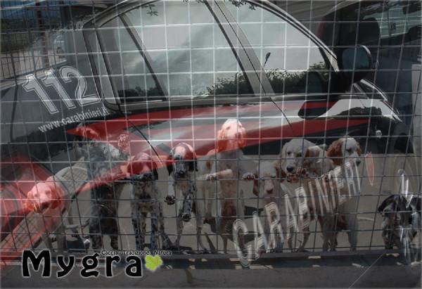Carabinieri Liberano cani caccia