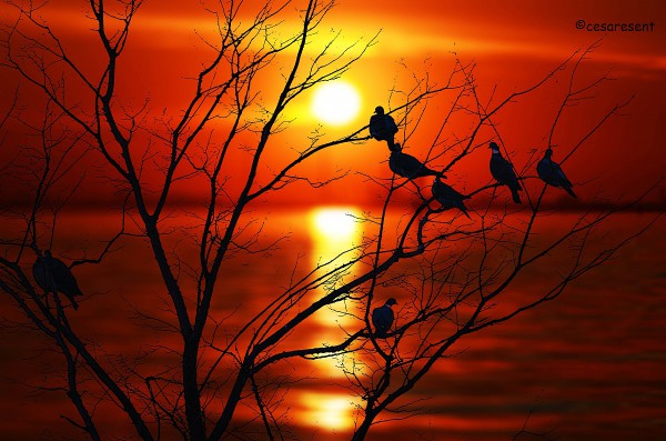colombacci-al-tramonto