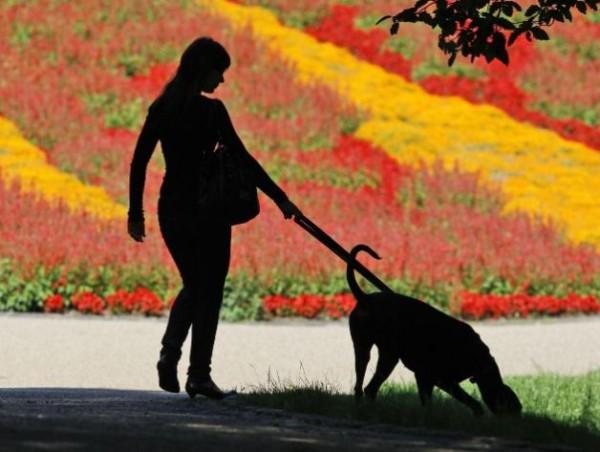 donna-e-cane