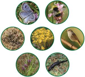 Biodiversita 1