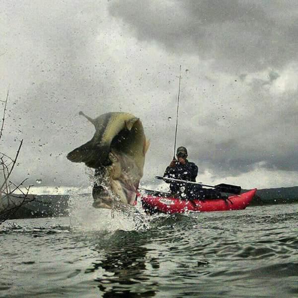 Pesca.......