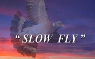 Caccia-al-Colombaccio-slow-fly-2017