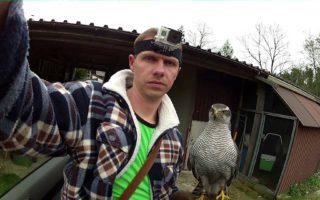 Goshawk-vs-Crows-8