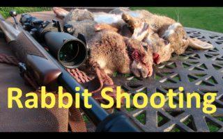 Rabbit-Shooting-at-the-Paddock