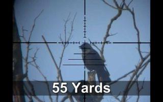 Slow-Motion-Airgun-Pigeon-Crow-Hunting-9