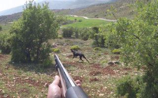 nice-point-at-quail-hunting-in-Lebanon-HD-gopro-shotkam