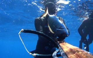 spearfishing-shots