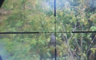 Air-Rifle-Hunting-Wood-Pigeon-Air-Arms-S410-78yds