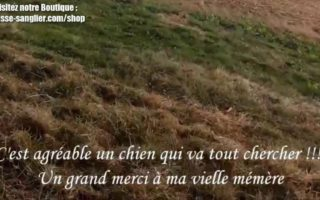 Chasse-aux-pigeons-ramier