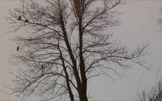 Crow-Hunt-December-13-2016-Full-Edit