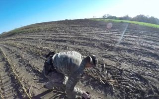 Crow-and-Mourning-Dove-Hunting-In-Wisconsin
