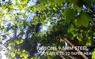 Pigeon-catapult-kill-headshot-sling-shot-catapult-hunting